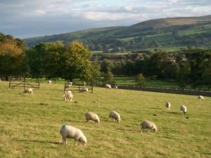 Bez pasoucích se oveček by to nebylo ono
